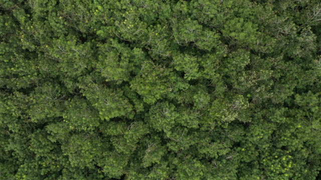 Top view zoom out of rainforest and wind