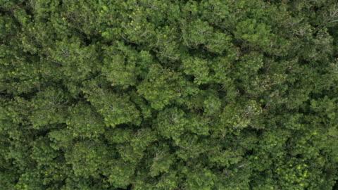vídeos y material grabado en eventos de stock de vista superior alejarse de la selva tropical y el viento - viento