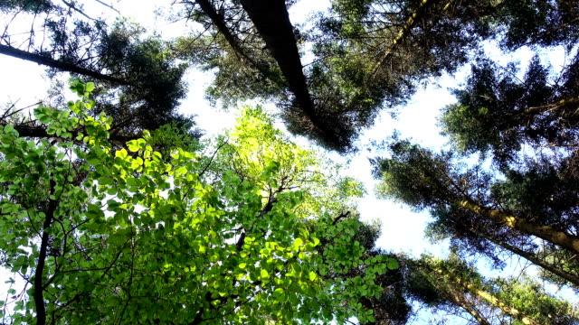 stockvideo's en b-roll-footage met toppen van de bomen zwaaien uit wind op achtergrond blauwe hemel - ooglid