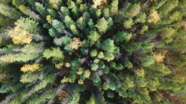 Topview Beautiful views of the forest Aerial view