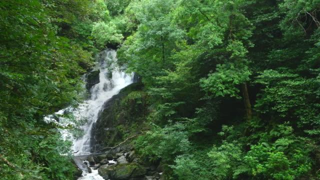 Torc Wodospad w pobliżu Killarney w Irlandii – film