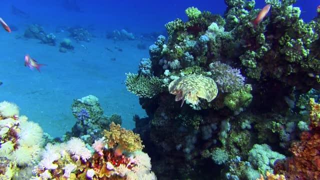 vídeos y material grabado en eventos de stock de torpedo ray - coral cnidario