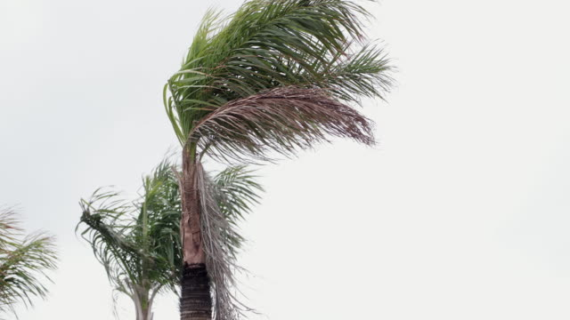 Torrential Rain in Cayo Coco, Cuba Torrential Rain and palm tree in Cayo Coco, Cuba caribbean sea stock videos & royalty-free footage