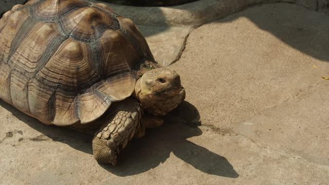 tortoise turtle slowly moving