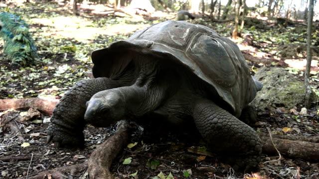 tortoise - salud stok videoları ve detay görüntü çekimi