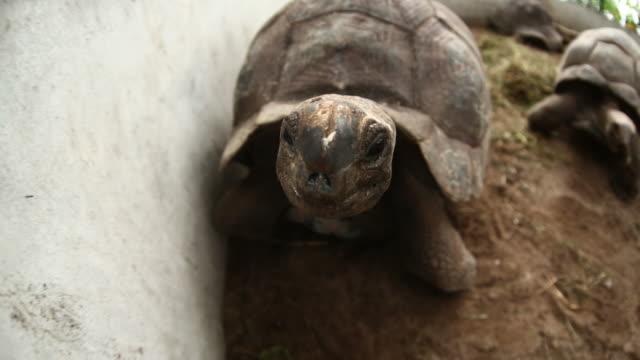 Tortoises races  giant tortoise stock videos & royalty-free footage