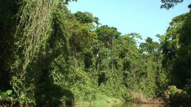 Tortuguero National Park channel video