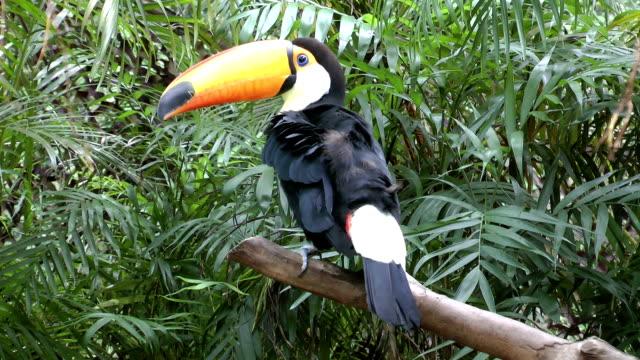 Toucan on tree