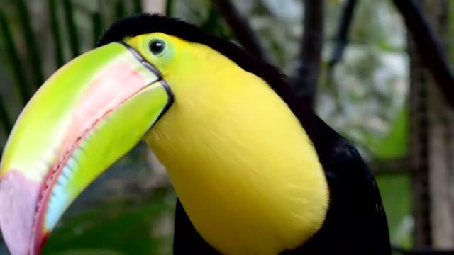 Toucan video