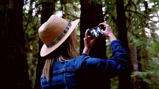 touristische ausflüge kalifornien mammutbäume - staatspark stock-videos und b-roll-filmmaterial