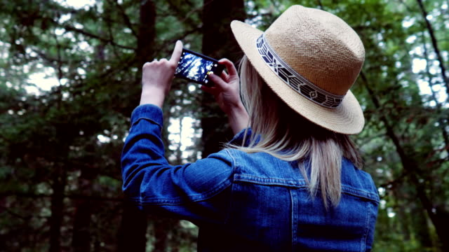 vídeos de stock e filmes b-roll de tourist exploring california redwoods - fotografar