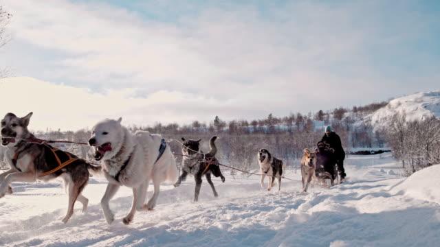 slo mo turist ha kul på en släde som dras av grupp av hundar - vintersport bildbanksvideor och videomaterial från bakom kulisserna