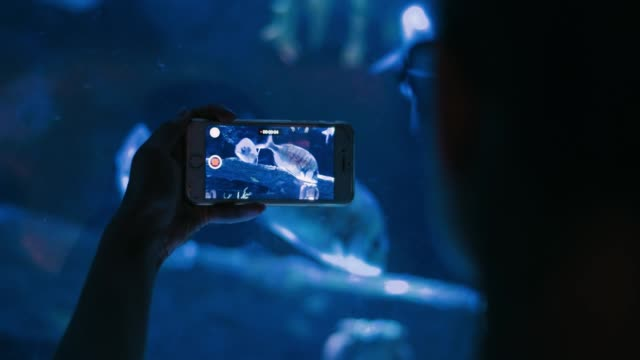 Tourist making video with fishes floating in aquarium on smartphone