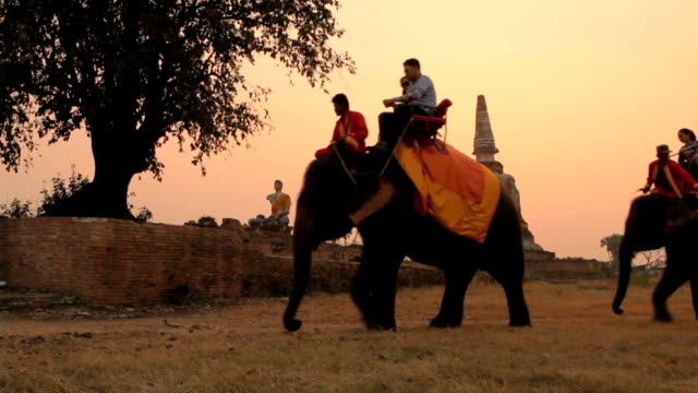 Tourist rides elephants and stupa at Ayutthaya in Thailand video