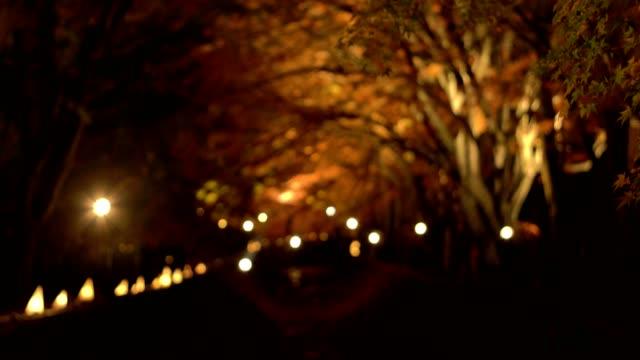 山梨県河口湖で秋の夜もみじ回廊やもみじのトンネルを訪れる観光客 - 廊下点の映像素材/bロール