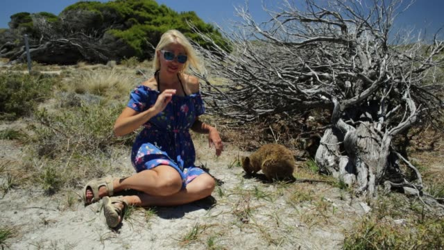 Tourist with two Quokka video