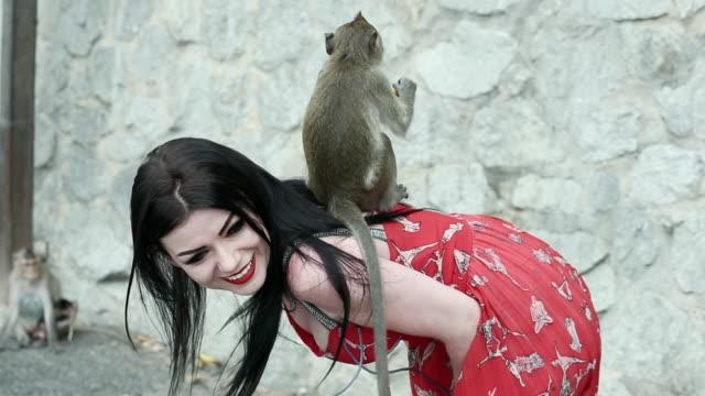 turist kvinnor utfodring och leker med grupp av stygg monkey - gibbon människoapa bildbanksvideor och videomaterial från bakom kulisserna