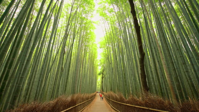 vídeos de stock e filmes b-roll de ws tourists admiring amazing bamboo forest in japan - cidade de quioto