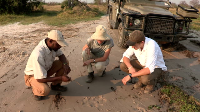stockvideo's en b-roll-footage met tourists and safari guide looking at animal tracks,botswana - guide