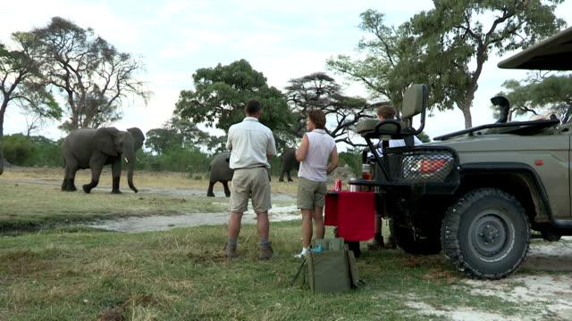 touristen ihren abendlichen mit elefanten zu fuß im hintergrund, botswana - großwild stock-videos und b-roll-filmmaterial