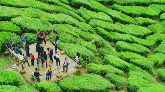 tourists enjoying tea plantations at the cameron highlands in northern malaysia - rodzaj doliny filmów i materiałów b-roll