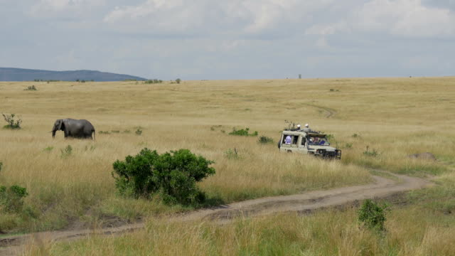 Tourists in jeep on a game ride through Maasai mara video
