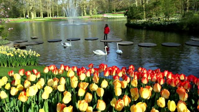 観光客のキューケンホフ公園としても知られ、ヨーロッパの庭園。 - キューケンホフ公園点の映像素材/bロール