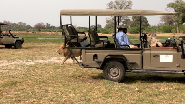 Tourists on game drive safari vehicle looking at lions,Botswana video