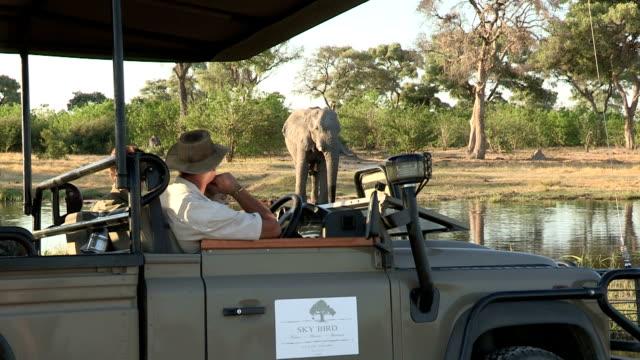 touristen safari fahrzeuge anzeigen auf einem elefanten, botswana - großwild stock-videos und b-roll-filmmaterial