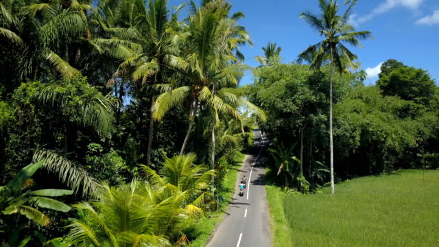 AERIAL: Tourists on motorbikes driving through palm tree jungle towards village video