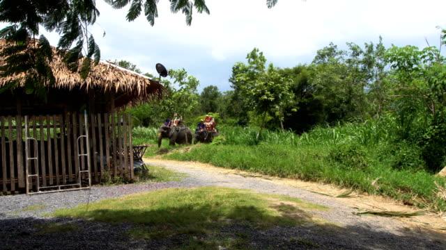 Tourists Riding Elephant video