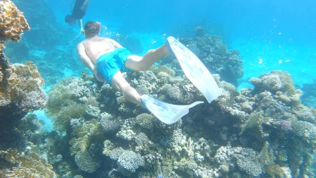vídeos y material grabado en eventos de stock de los turistas nadan en la zona protegida del mar rojo. egipto. - escafandra autónoma