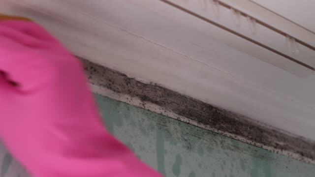toxic black mould (stachybotrys) remediation - bleach stock videos & royalty-free footage