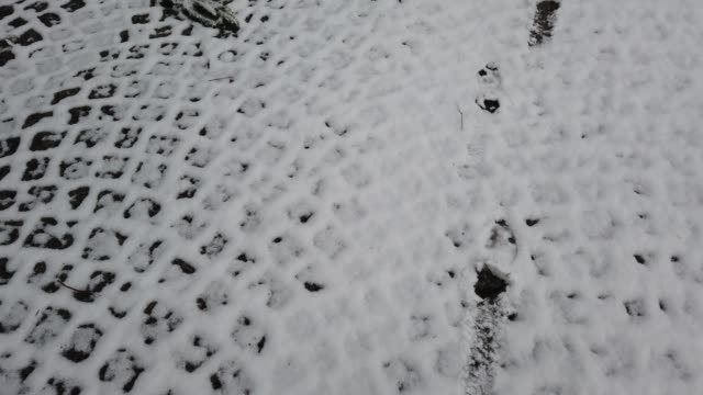 Traces on snow. Shooting in the winter. video