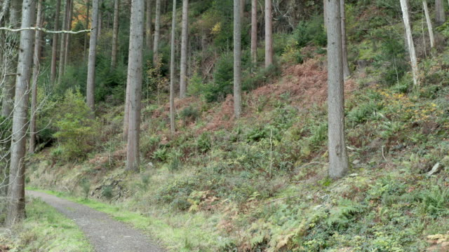 Track leading through Scottish pine woodland with plants starting to displaying autumn colour