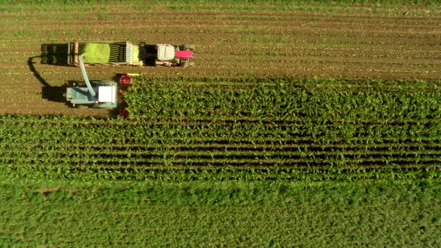 HD: Tracking Aerial Shot Of Harvesting Corn