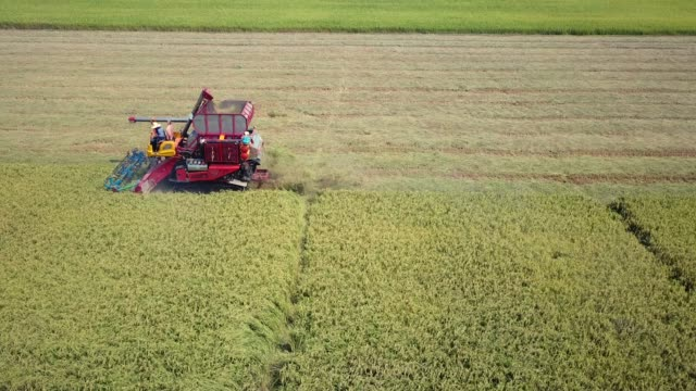 Tracking Aerial Shot Of Harvesting Corn Tracking Aerial Shot Of Harvesting Corn north america stock videos & royalty-free footage