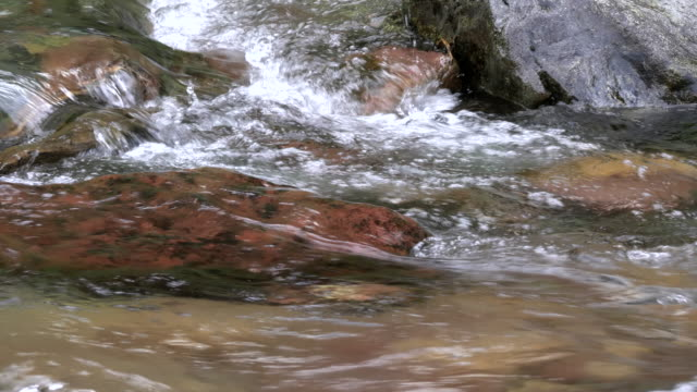 tracking clip of a water ouzel at glacier national park - cinclus video stock e b–roll