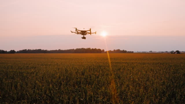 AERIAL Tracking flying over fields of corn at sunset