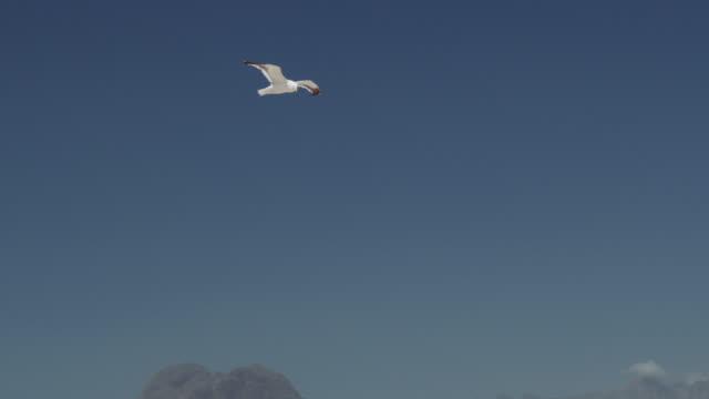 跟蹤在慢動作中飛行的海鷗的鏡頭,然後是景觀的揭示 - 海鷗 個影片檔及 b 捲影像