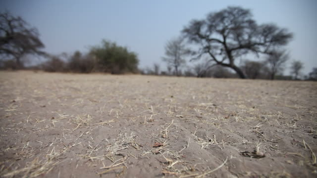 Tracking shot of dry soil in Africa. Tracking shot of dry soil in African wilderness. thirsty stock videos & royalty-free footage