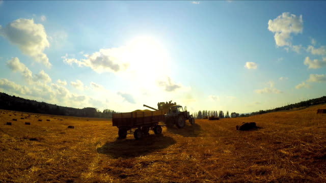 Tractor and combine harvester leave the field after agricultural work Tractor and combine harvester leave the field after farming, on the field lie bales of hay, in the background forest and sky with clouds, shooting against the sun, wide angle monoculture stock videos & royalty-free footage