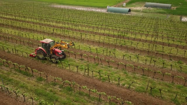 Tractor cutting grass in rows of vines