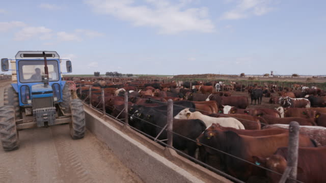 Tractor delivering food into a cement trough at a feedlot video