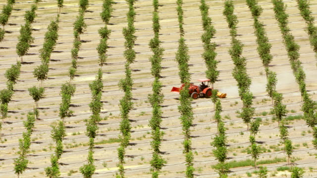 AERIAL Tractor driving through a large orchard in California, USA