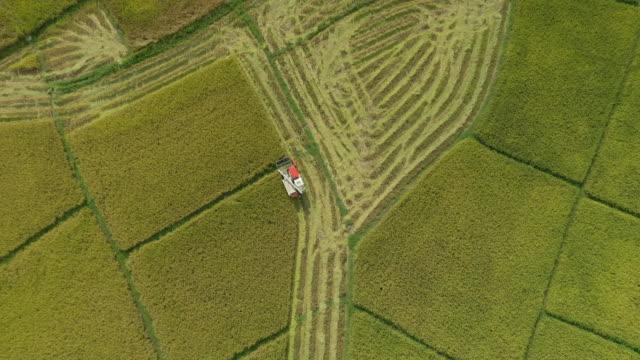 tractor harvesting rice field with tracking shot top view - pole ryżowe filmów i materiałów b-roll