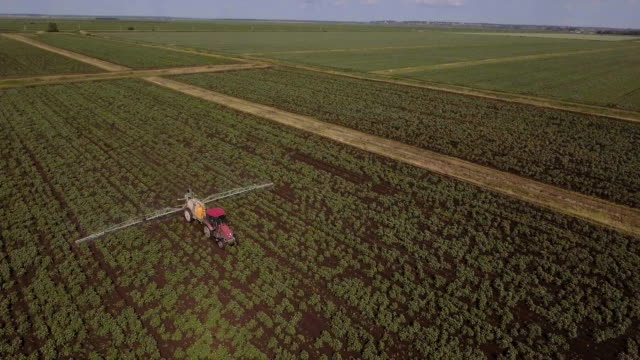 Tractor is spraying fertilizers potato field.Aerial video video