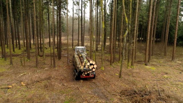 CLOSE UP: Tractor loaded with tree trunk logs driving between spruce tree trunks video