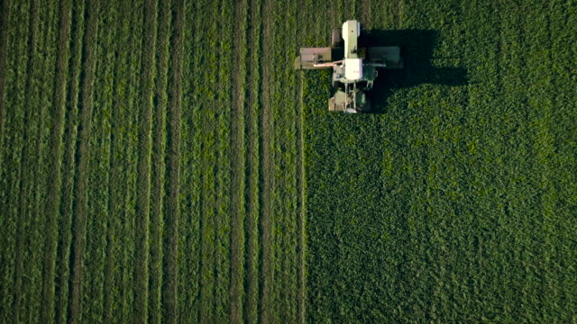 tractor moving in the green field - aerial agriculture stock videos & royalty-free footage