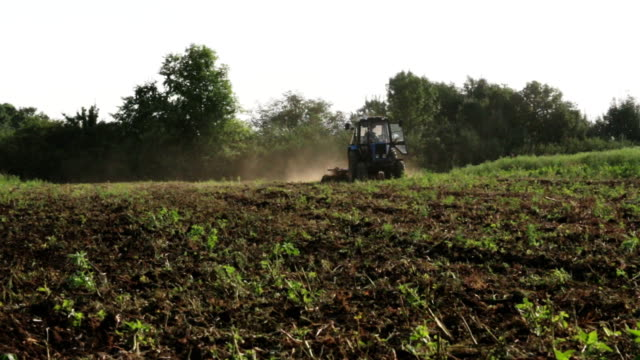 Tractor plowing the black earth plow field at morning overgrown with weeds video